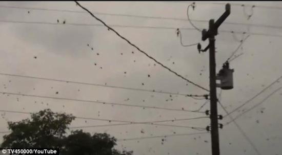 В Бразилии прошёл «дождь» из социальных пауков