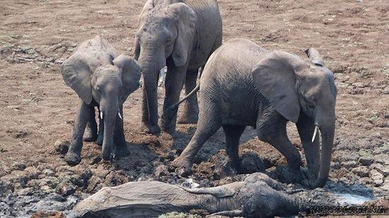 10 распространённых заблуждений о животных