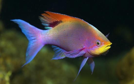 Учёные подсмотрели, как думают рыбы