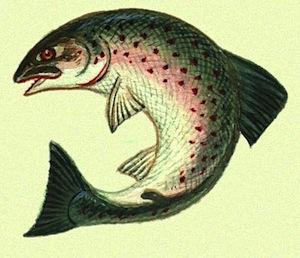 Несмотря на то, что рыбы дышат жабрами, у большинства из них есть нос