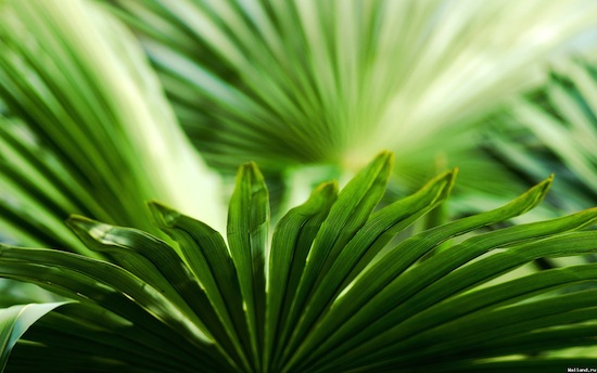 Растения могут быть гораздо благороднее, чем мы о них думаем