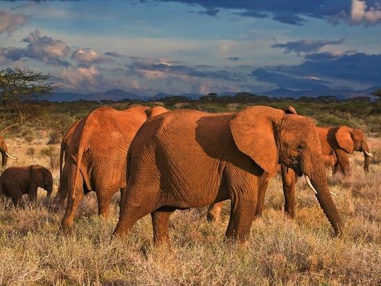 Слоны не хотят иметь с людьми ничего общего