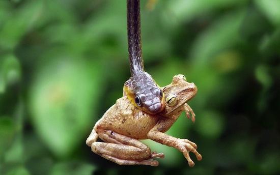 6 хищников с умопомрачительными способностями, которые часто недооценивают