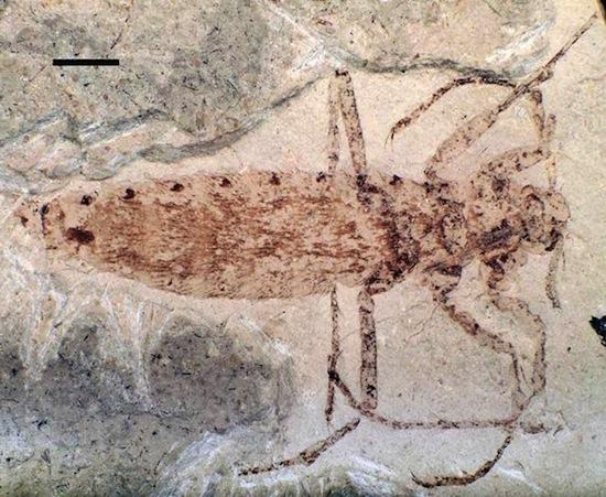На динозаврах водились гигантские блохи