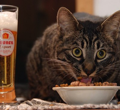 Кошки не любят пить воду из миски рядом со своим кормом, потому что боятся, что вода заражена