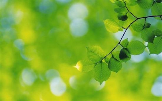Раньше символом любви и сексуальности считался зелёный цвет, а не красный