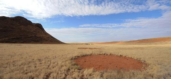 Причина появления таинственных «кругов фей» в африканской пустыне — обыкновенные термиты