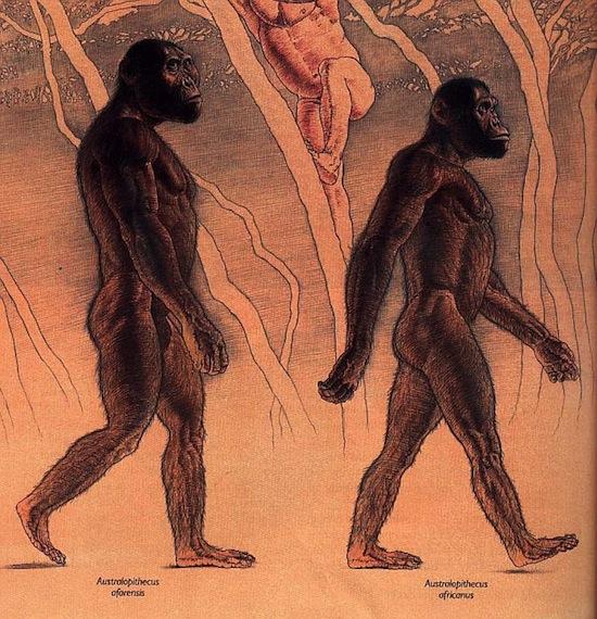 6 странных теорий о происхождении человеческого интеллекта