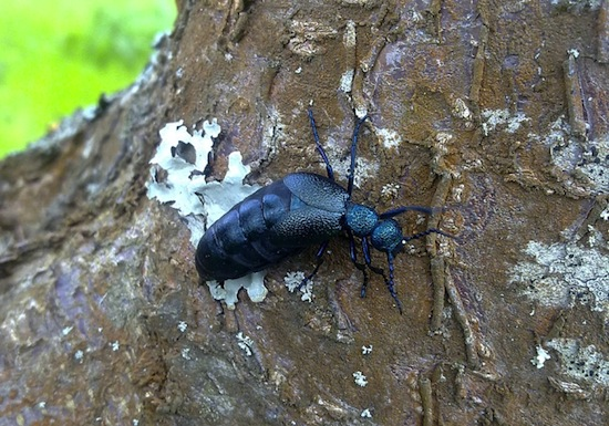 Города будущего будут переполнены насекомыми