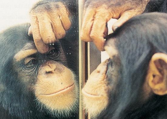 Самый простой тест на самосознание проводится с помощью обычного зеркала
