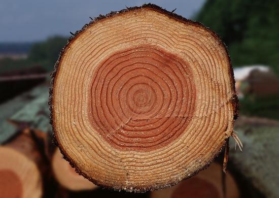 Площадь срезов всех ветвей дерева на каждой высоте остается одинаковой и равна площади среза основного ствола
