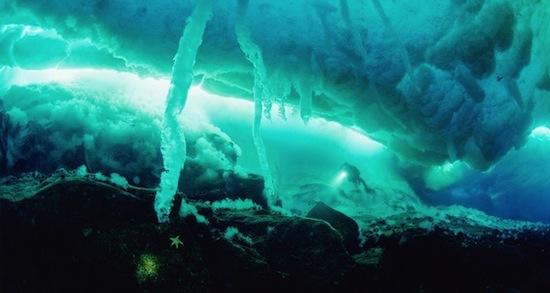 В арктических морях подо льдом есть огромные сосульки
