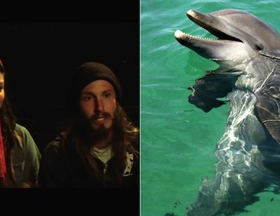 Дельфины могут попытаться изнасиловать и убить вас