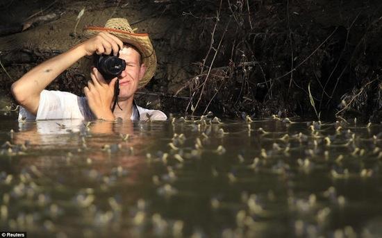 На реке Тис ежегодно проходит удивительное природное «шоу» в брачный период подёнок