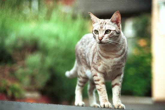 То, что у кошек и собак считается коленями, на самом деле — лодыжки, а колени спрятаны в шерсти