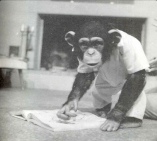 Шимпанзе Люси знала 140 слов, пила джин и смотрела порно