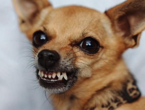 Вопреки распространённому мифу, собаки видят мир цветным, а не чёрно-белым