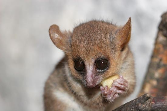 10 самых странных и интересных видов животных, открытых за последнее время