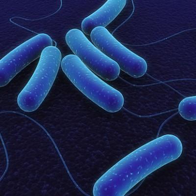 5 интересных фактов о микробах, живущих внутри вас