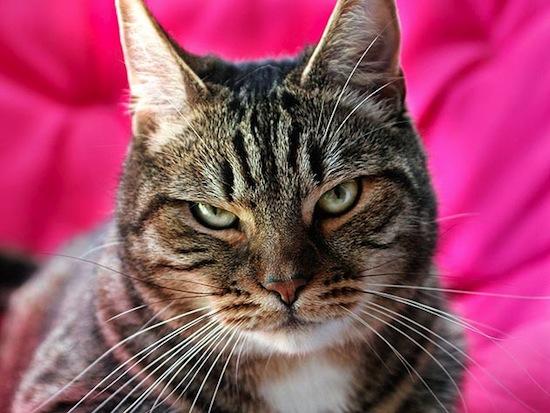 Скорее всего, вы не понимаете свою кошку