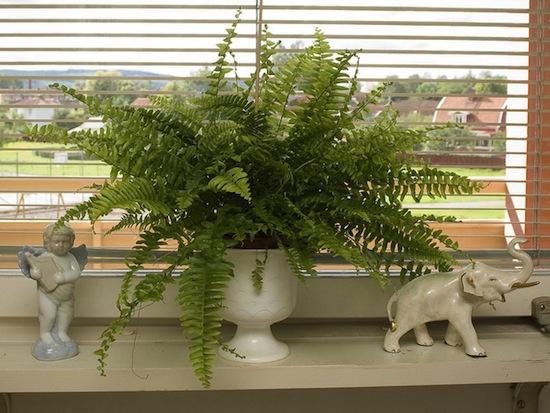 Комнатные растения действительно очищают воздух