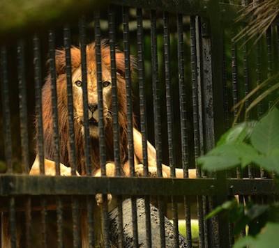 На Коста-Рике решено закрыть все государственные зоопарки и выпустить животных на волю
