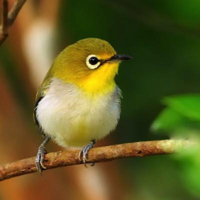 Птицы соблюдают скоростной режим на дорогах, даже если водители его игнорируют