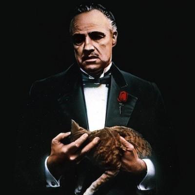 Знаменитая кошка Дона Корлеоне из «Крёстного отца» забрела на съёмочную площадку случайно