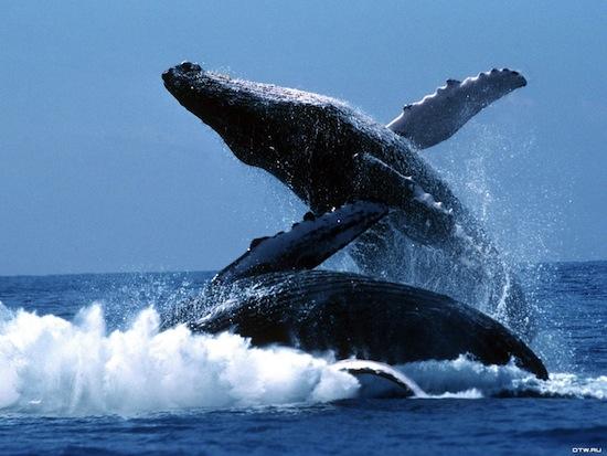 У китов существует женская дружба