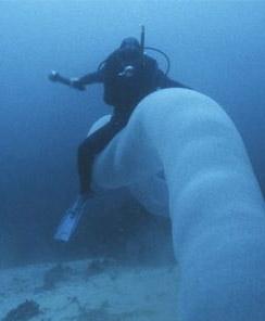 Невероятно огромную светящуюся морскую тварь удалось заснять на видео