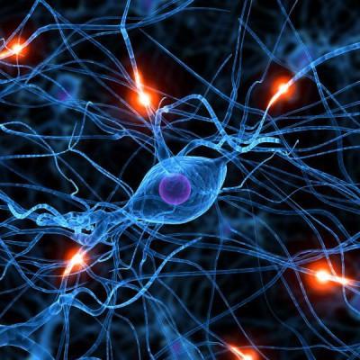 С точки зрения мозга отказ похож на боль