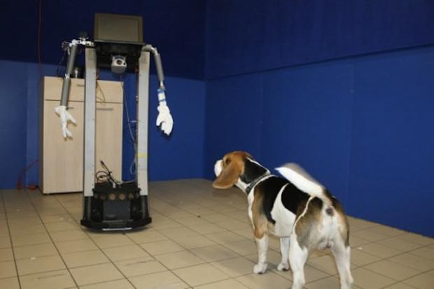Собаки могут общаться с роботами