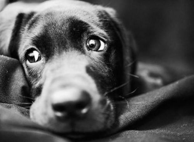 «Умные» собаки страдают больше, чем «глупые» мыши
