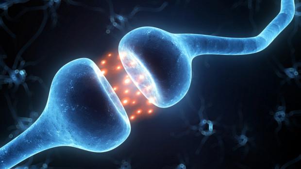 Возможно, сознание возникает в результате квантовых процессов в головном мозге
