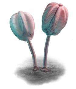 Siphusauctum gregarium