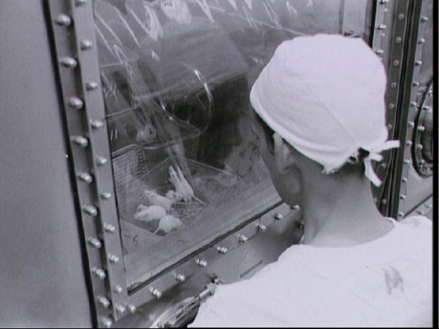 Мухи, Иван Иванович, Альберт II и ещё 10 животных, побывавших в космосе