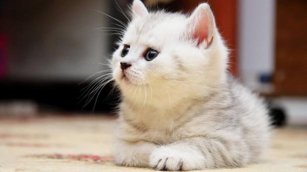 В некоторых странах у кошки не 9 жизней, а 7 или 6