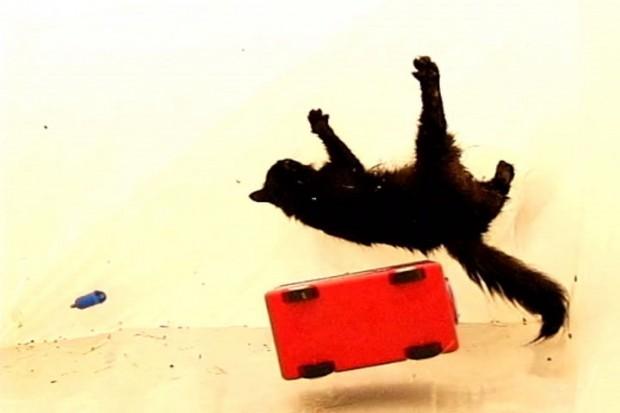 Кошки не могут приземляться на лапы в условиях невесомости, так как не понимают, где низ