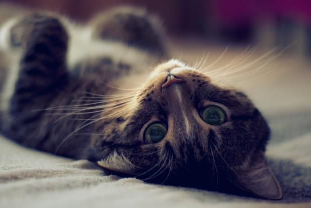 Если кошка сумела протиснуть куда-нибудь свою голову, значит пройдёт и всё остальное тело