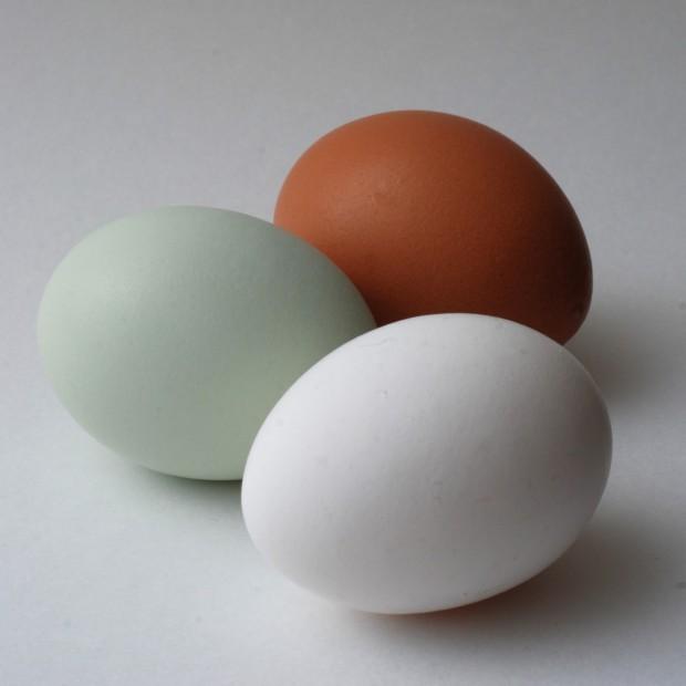 Некоторые куры несут синие яйца