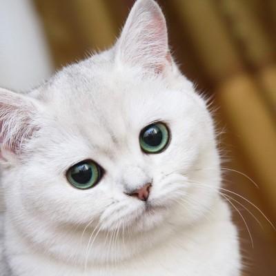 Кошки испытывают стресс от слишком ласковых хозяев