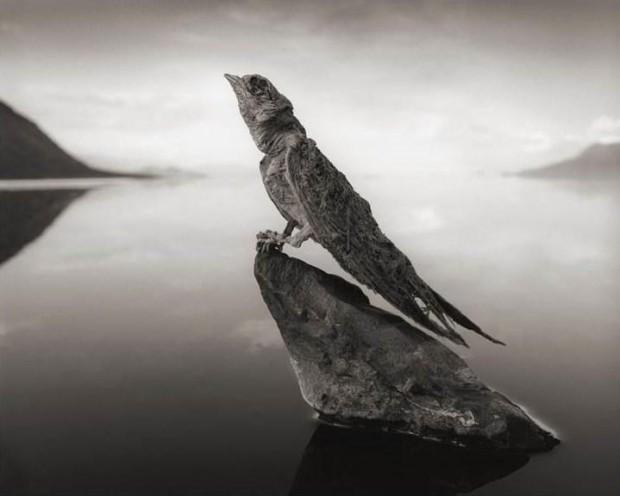 натрон озеро фото