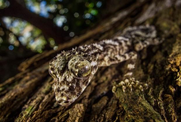 14 природных чуда, которые учёные обнаружили на нашей планете этой осенью