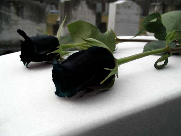 Картинки розы черные