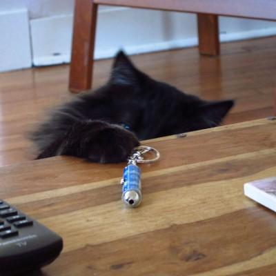 Охота за лазерной указкой наносит кошке психическую травму