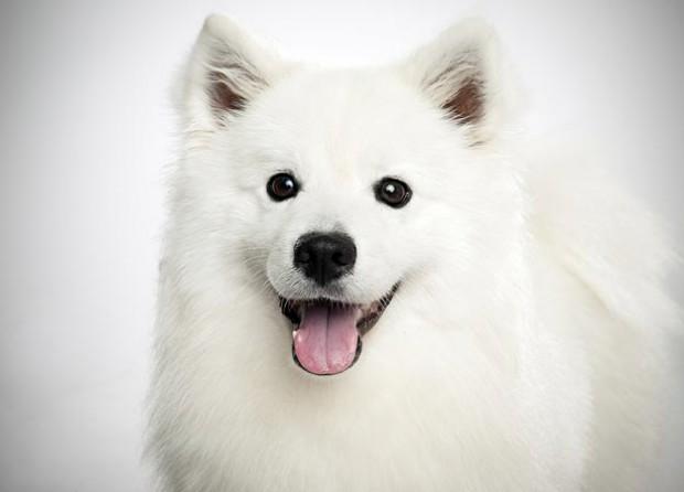 Собаки могут предсказывать, что хозяин сделает в следующий момент