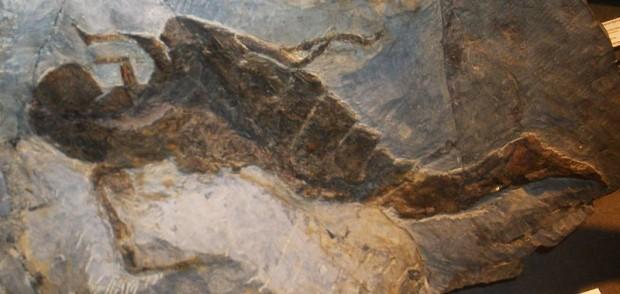 Существовал гигантский морской скорпион 2,5 м в длину