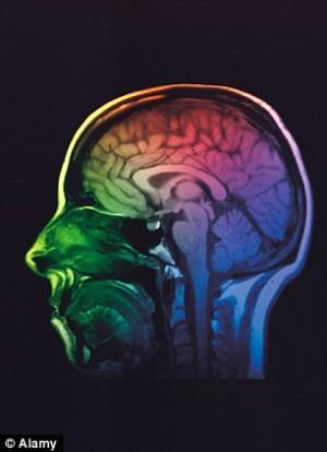 Только в человеческом мозгу есть область, способная просчитывать разные варианты действий