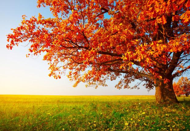 Деревья обладают фундаментальным свойством Вселенной — чем они старше, тем быстрее растут