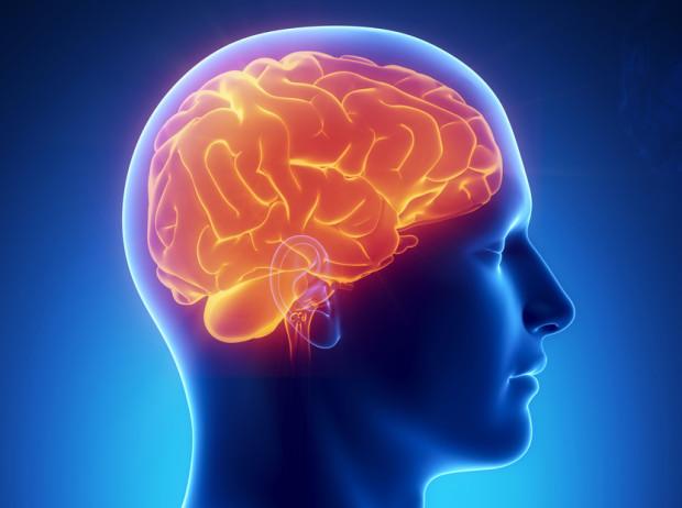 Большая часть вашего мозга уверена, что вы должны постоянно есть, много спать, мало работать и чаще размножаться